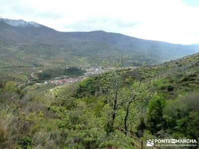 Cerezos flor Jerte; Nogaleas; rutas de senderismo en madrid; senderistas madrid;mochilas para trekki